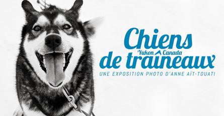 expo chien traineau 2013